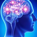 واقعیت های شگفت انگیز در مورد مغز انسان