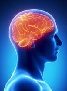 مراقبه و مغز