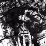 تجربه ماورایی – شکل انرژیکی افکار خودکشی (ترجمه شده)