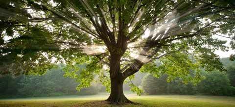 درختان و انرژی