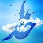 محمد.و