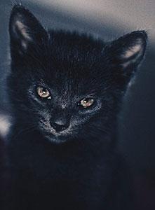 گربه سیاه جن