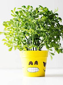 آیا گیاهان احساس دارند؟ نیروهای روانی گیاهان
